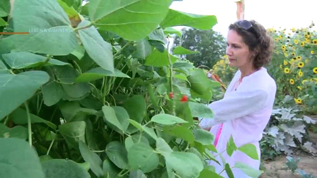Städter bauen eigenes Gemüse im gemieteten Acker an