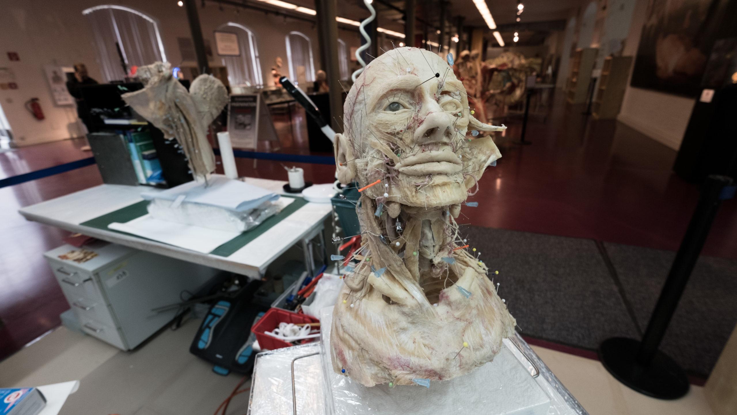 Hier werden die Plastinate der Körperwelten-Ausstellung hergestellt